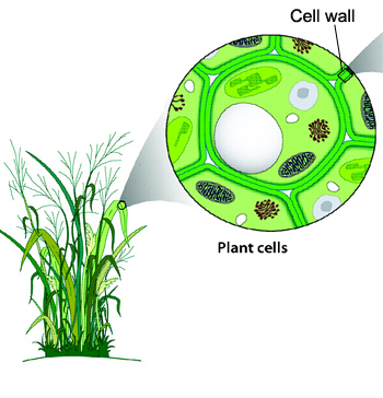 plant tissue culture research papers pdf